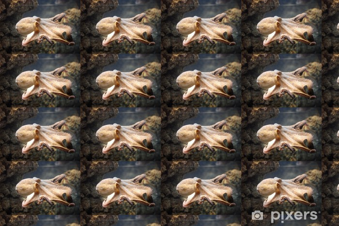 Tapeta na wymiar winylowa Pulpo - Zwierzęta żyjące pod wodą