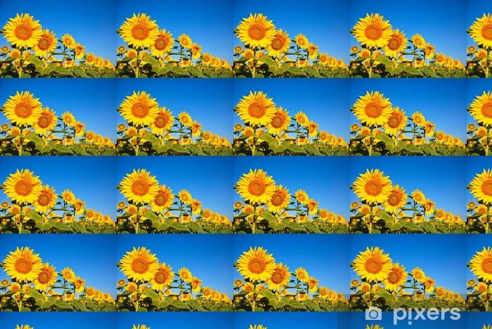 Carta da parati in vinile su misura Mehrere Sonnenblumen - Agricoltura