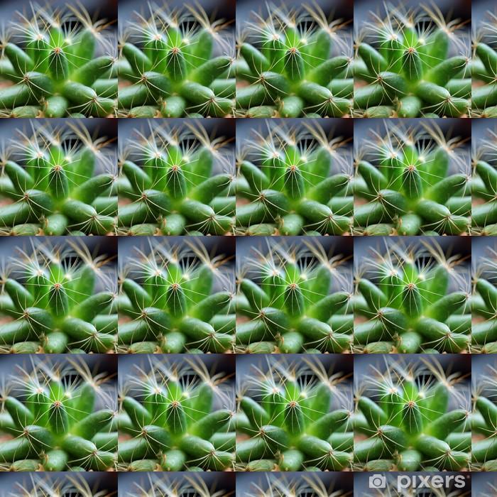 Papier peint vinyle sur mesure Gros plan de la belle cactus - Plantes