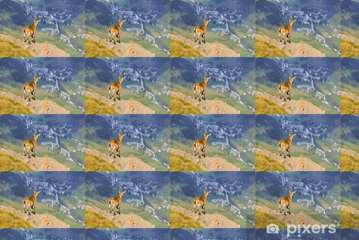 Tapeta na wymiar winylowa Ibex patrząc górskiej wioski - Ssaki