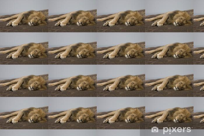 Papier peint vinyle sur mesure Lion 2 - Mammifères