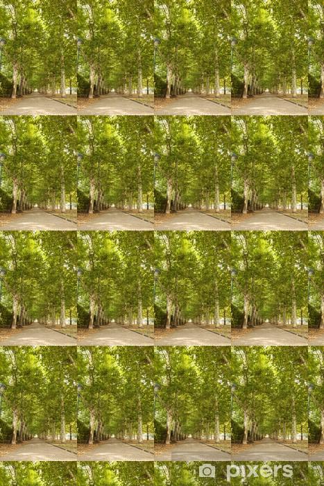 Vinylová tapeta na míru Chodník podél lemované stromy v parku - Město