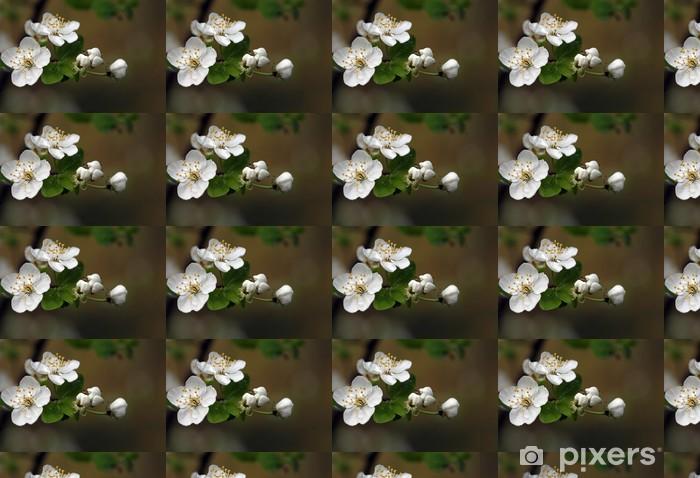 Tapeta na wymiar winylowa Kwitnące gałązki z drzew owocowych - Pory roku