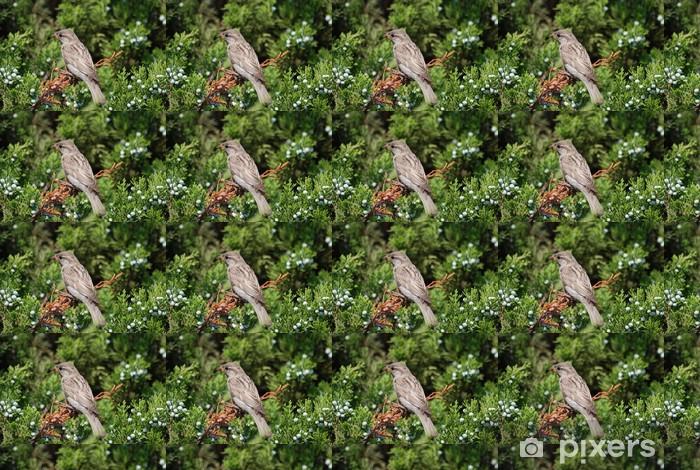 Tapeta na wymiar winylowa Piaf - Ptaki