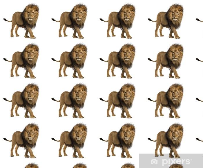 Papel pintado estándar a medida Vista lateral de un león que camina, Panthera Leo, de 10 años - Mamíferos