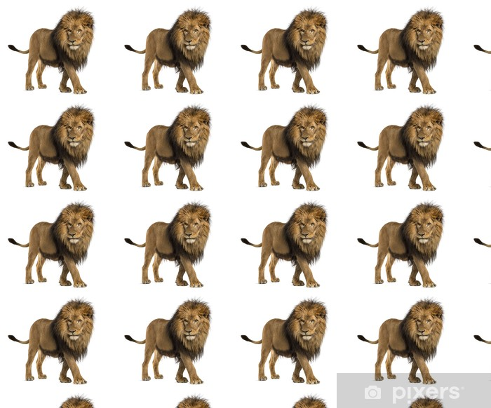 Side view of a Lion walking, Panthera Leo, 10 years old Vinyl custom-made wallpaper - Mammals