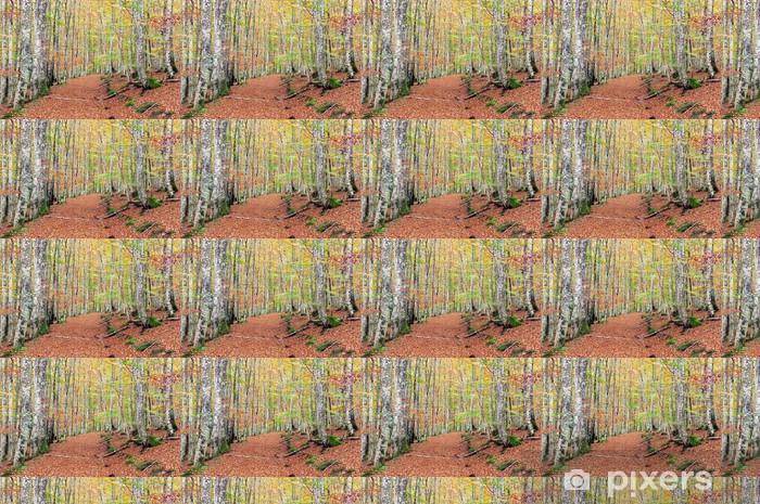 Papier peint vinyle sur mesure Hêtres avec des couleurs vives et des sentiers - Arbres