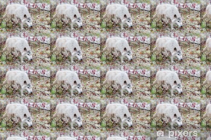 Papier peint vinyle sur mesure Loup Blond (Canis lupus) Trots Grâce à faibles chutes de neige - Saisons