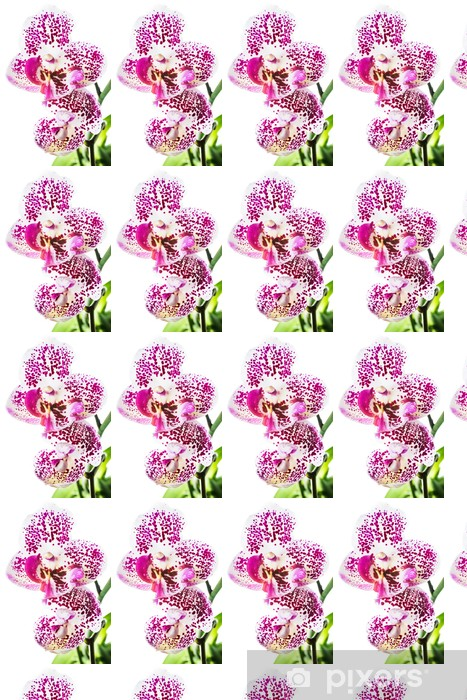 Papier peint vinyle sur mesure Orchidée de floraison bigarrée, isolé sur fond blanc - Fleurs