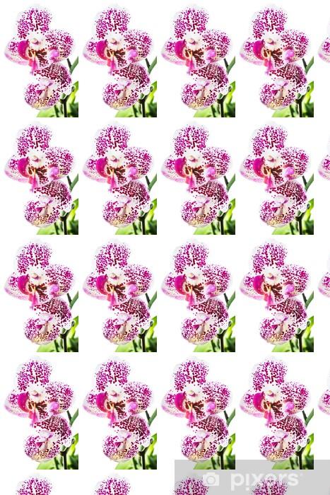 Vinyltapete nach Maß Bunt blühende Orchidee, isoliert auf weißem Hintergrund - Blumen