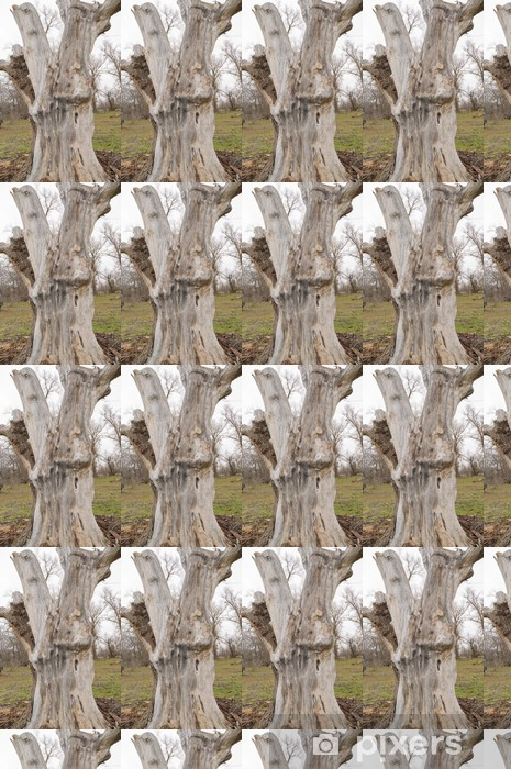 Tapeta na wymiar winylowa Duży pieniek drewna bez kory drzewa - Lasy