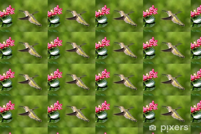 Papier peint vinyle sur mesure Annas Hummingbird (Calypte anna) - Oiseaux