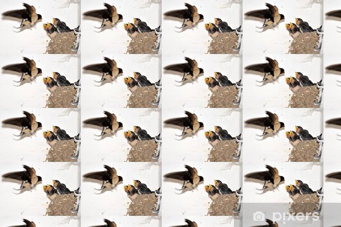 Carta da parati in vinile su misura Giovane rondine fienile nel nido con la bocca aperta - Uccelli