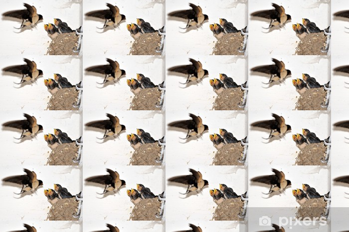 Papier peint vinyle sur mesure Jeune hirondelle de grange dans le nid avec la bouche ouverte - Oiseaux