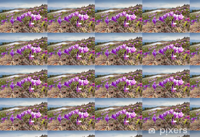 Blossom of crocuses at spring in the mountains Vinyl custom-made wallpaper - Mountains