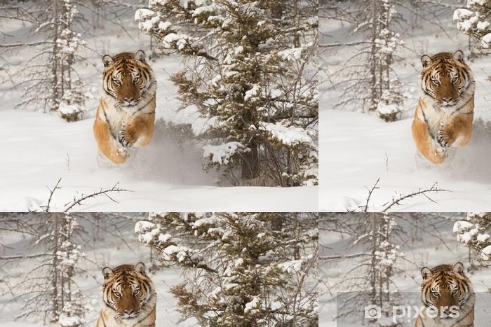 Siberian Tiger running in snow Vinyl Wallpaper - Themes