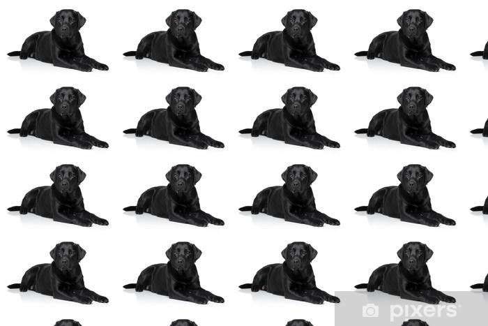 Vinylová tapeta na míru Labrador retriever pes - Savci