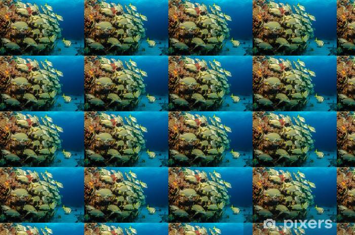 Papier peint vinyle sur mesure Grognements et les vivaneaux, mer des caraïbes - Animaux marins