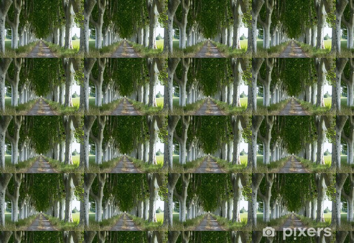 Vinyltapete nach Maß Landstraße in der Provence - Bäume