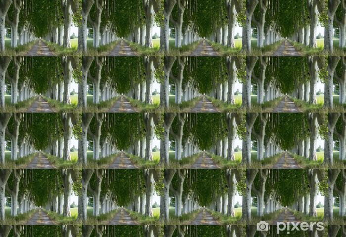 Tapeta na wymiar winylowa Droga krajowa w Prowansji - Drzewa