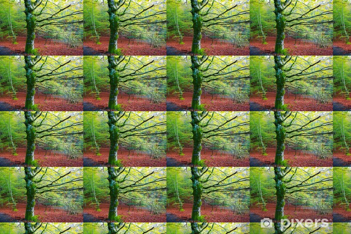 Papier peint vinyle sur mesure Automne Irati jungle hêtre et de Navarre Pyrénées Espagne - Europe