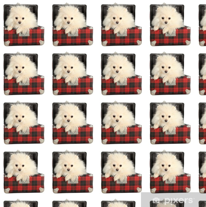 Vinyltapete nach Maß Pommerschen Welpen kleiner Hund guckt aus alten Koffer - Säugetiere