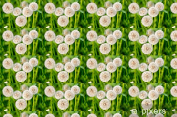 Vinyltapete nach Maß Löwenzahn - Blumen