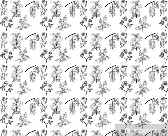 Vinyltapete nach Maß Satz von fünf Wildkräuter skizziert isoliert auf weiß - Pflanzen