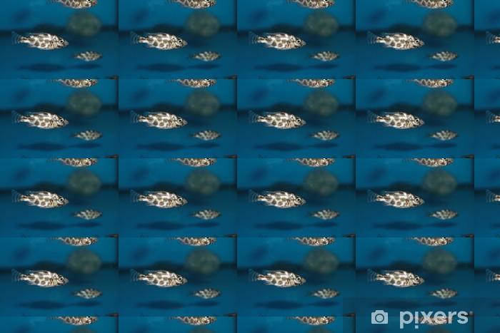 Vinylová tapeta na míru Livingston je Cichlid (Nimbochromis livingstonii) akvarijní ryby - Vodní a mořský život