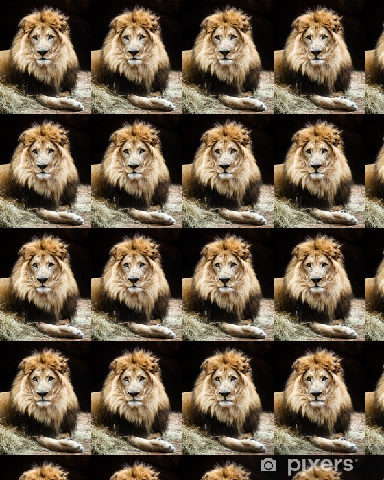 Portrait Of Male African Lion Wallpaper Pixers We Live To Change