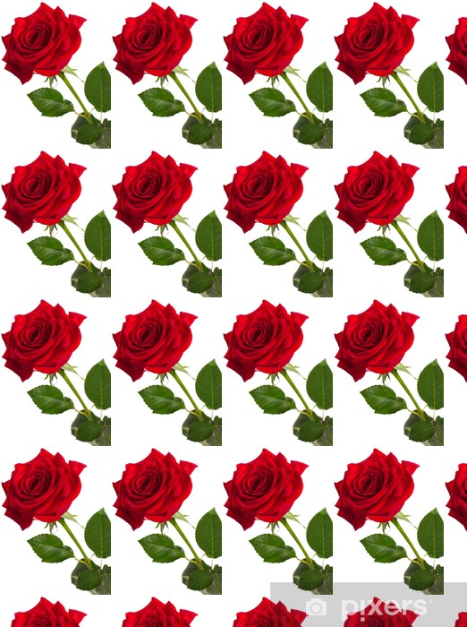 Vinyltapete nach Maß Red rose - Blumen