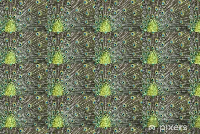 Tapeta na wymiar winylowa Pawie pióro portret ptak wspaniały otwarte koła - Ptaki
