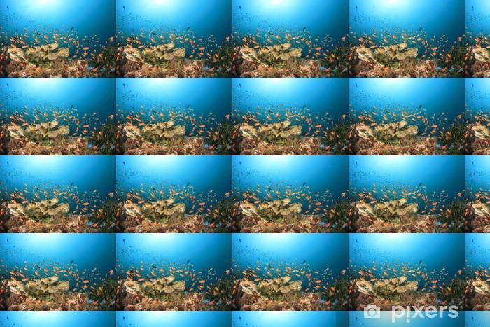 Tapeta na wymiar winylowa Coral Reef Underwater - Zwierzęta żyjące pod wodą