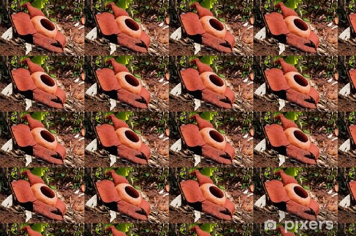 Tapeta na wymiar winylowa Rafflesia. Największy kwiat na świecie. - Azja