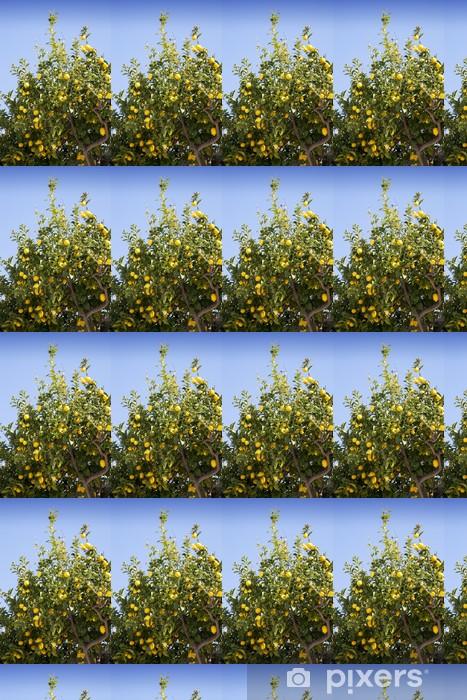 Tapeta na wymiar winylowa Lemon tree piękne dojrzałe cytryny organicznych - Europa