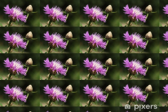 Papel pintado estándar a medida Flockenblume - Flores