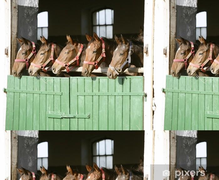 Vinylová Tapeta Zábavné plnokrevných koní v ohradě dveří - Savci