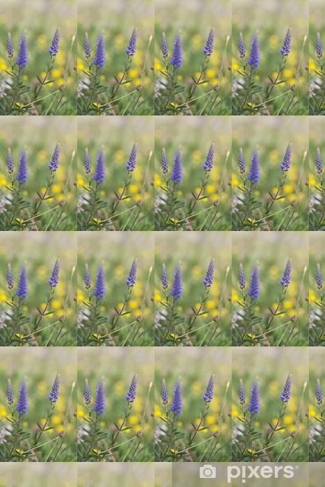 Spiked speedwell, Veronica spicata, Scrophulariaceae Vinyl custom-made wallpaper - Flowers