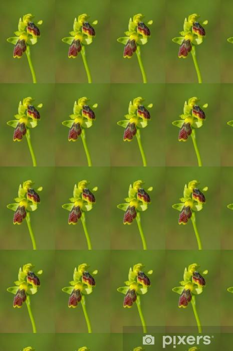 Vinylová tapeta na míru Ophrys Lutea - Ofride Gialla - Květiny