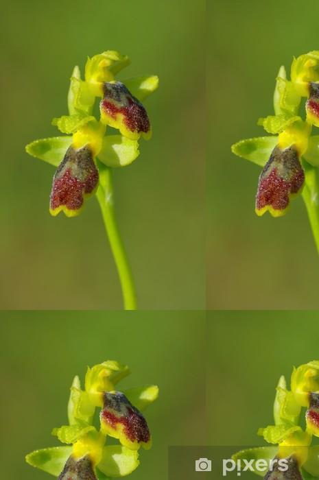 Vinylová Tapeta Ophrys Lutea - Ofride Gialla - Květiny