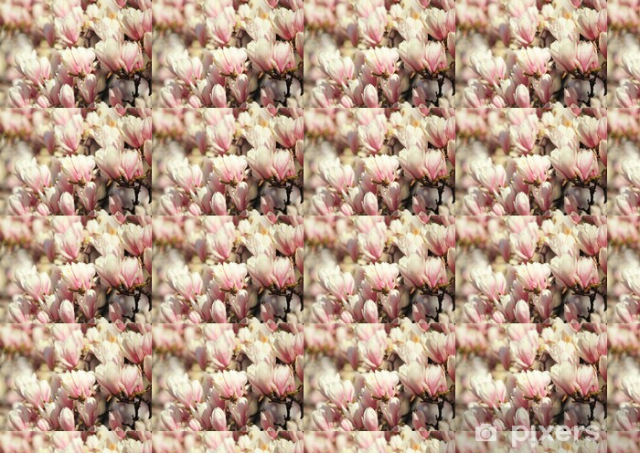 Tapeta na wymiar winylowa Kwiat magnolii piękne różowe wiosną - Kwiaty