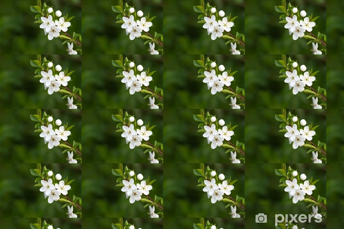 Tree With Beautiful White Flowers Wallpaper Pixers We Live To