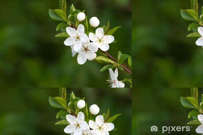 Vinyltapet Tre med vakre hvite blomster - Sesonger