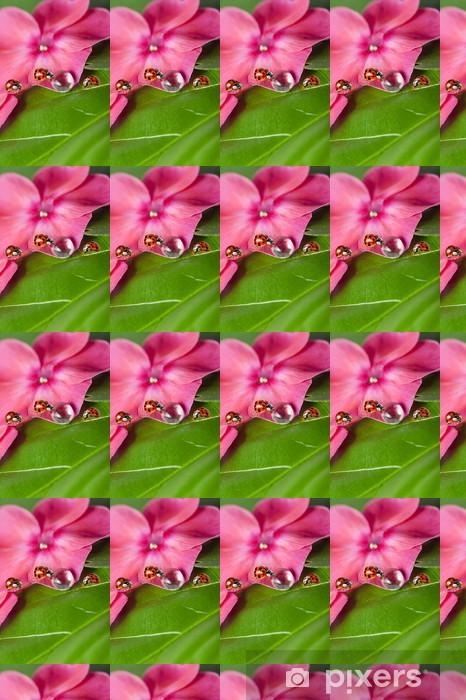 Vinyltapete nach Maß Marienkäfer zwischen Wassertropfen auf einer Blume - Andere Andere