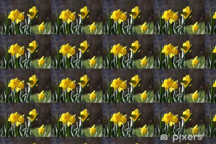 Papier peint vinyle sur mesure Narcisse sauvage close-up - Fleurs