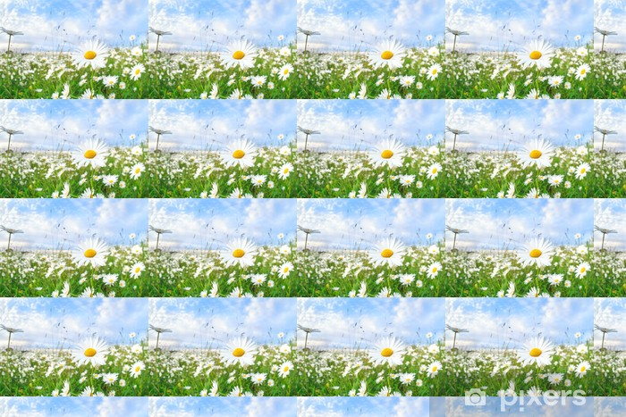 Tapeta na wymiar winylowa Rumianek kwiat nad błękitne niebo - Kwiaty