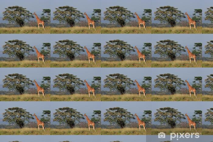 Tapeta na wymiar winylowa Rothschildowie żyrafa, Lake Nakuru National Park - Tematy