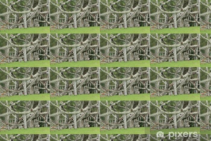 Carta da parati in vinile su misura Banyan Tree - Alberi