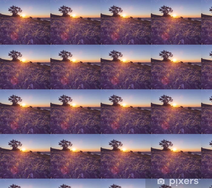 Tapeta na wymiar winylowa Łąka na zachód słońca - Rolnictwo