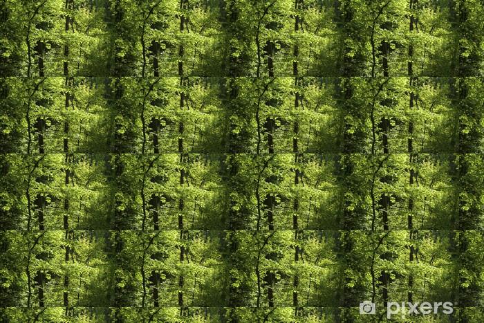 Papier peint vinyle sur mesure Maple et le charme de forêt au printemps - Saisons